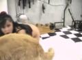 Pretty girl boned by a dog